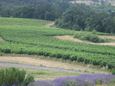 Oregon Pinot Noir 1