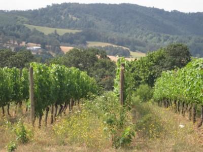 Oregon Pinot Noir 2