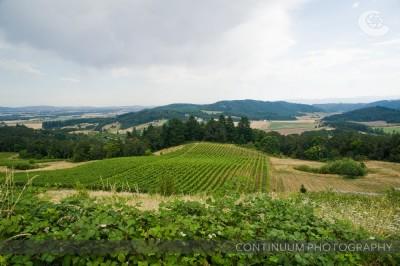 Wine Country Weddings 2