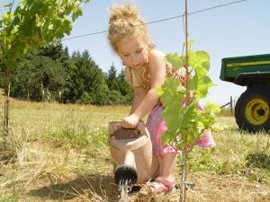How Wine Making is Like Raising Children 1