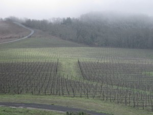 vineyard pruned 001