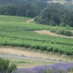 hedging 001