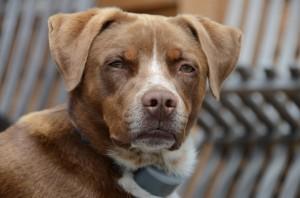 Oregon dog adoption