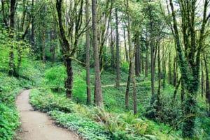path at hoyt arboretum