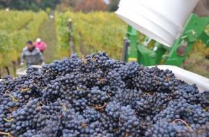 Harvest 2013 104