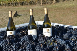 Wine from Youngberg Hill