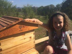 Becoming a Flow Hive Beekeeper at Youngberg Hill 1
