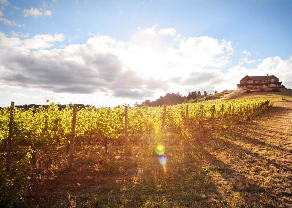 The Vineyards at Youngberg Hill Inn & Winery